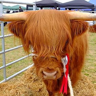 Sutherland County show  held in  Dornoch in July 15 minutes drive from The Old Manse Bed and Breakfast
